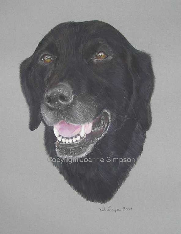 Black Labrador portrait by Joanne Simpson.