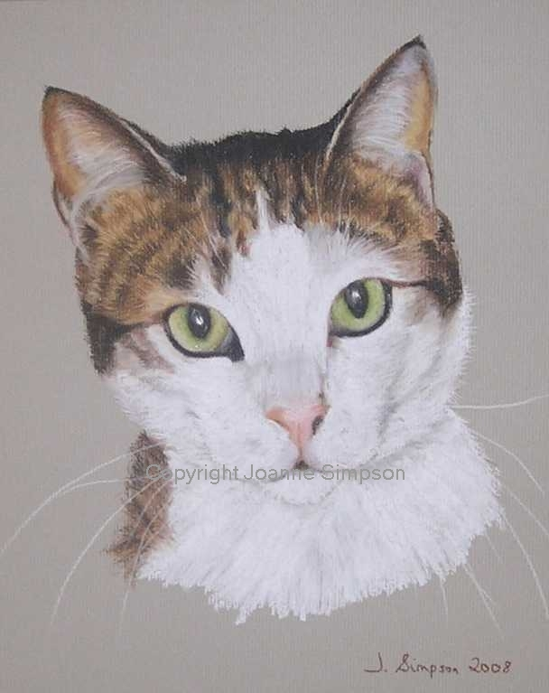 Cat pet portrait by Joanne Simpson.