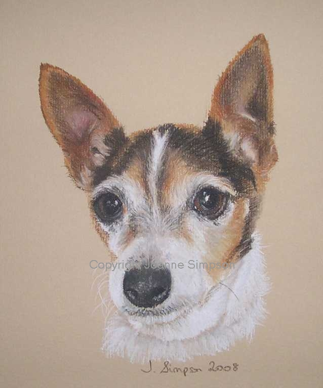 Chihuahua portrait by Joanne Simpson