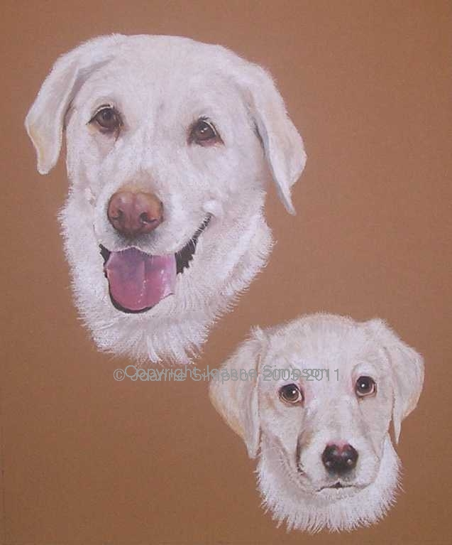 Golden Labrador pet portrait by Joanne Simpson