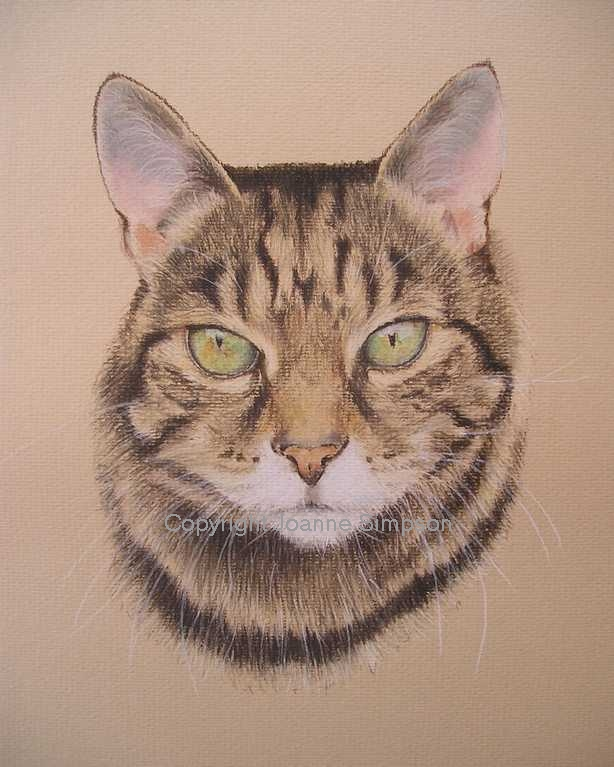 Tabby cat pet portrait by Joanne Simpson