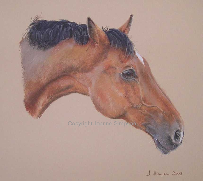 Horse portrait by Joanne Simpson
