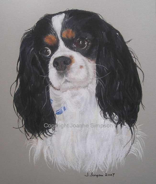 Cavalier King Charles Spaniel pet portrait by Joanne Simpson.
