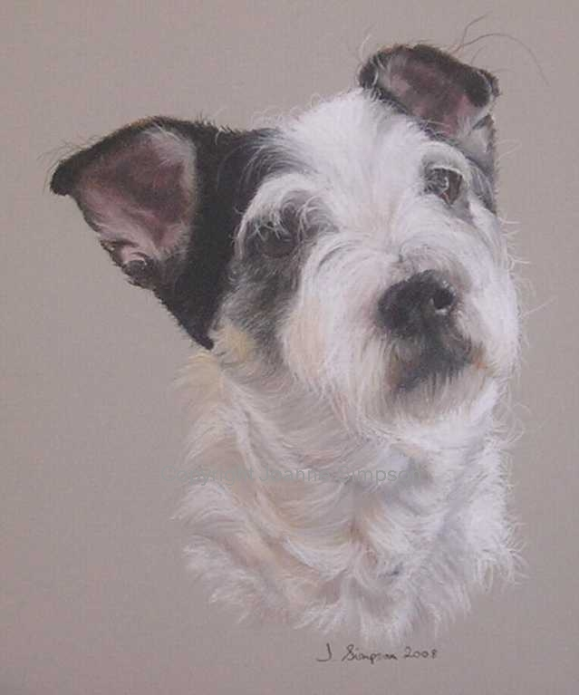 Jack Russell pet portrait by Joanne Simpson
