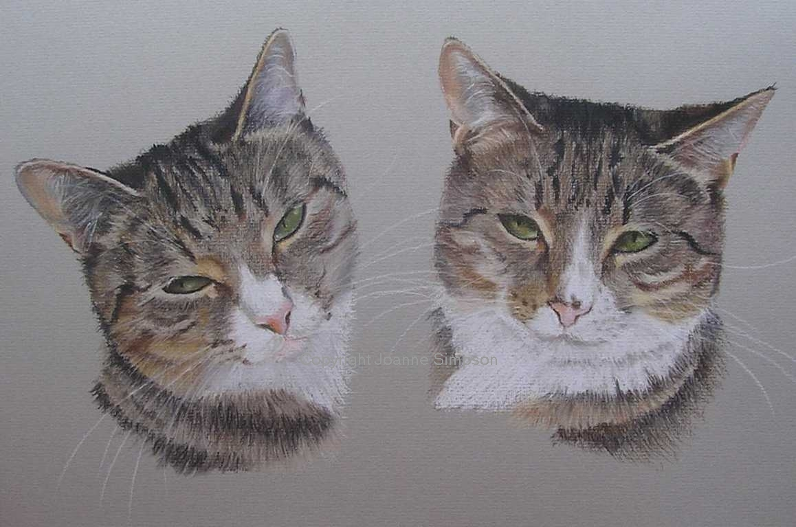 Tabby cat pet portrait by Joanne Simpson.