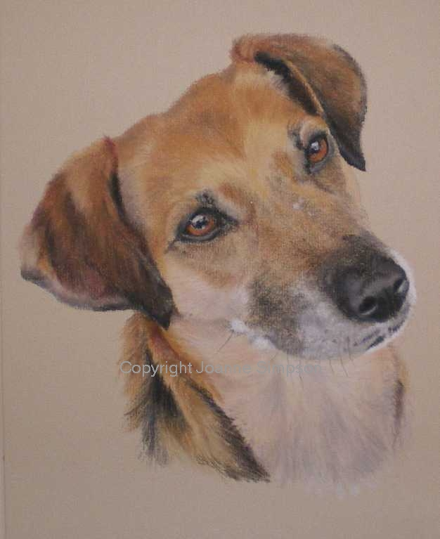 Cross breed pet portrait by Joanne Simpson.