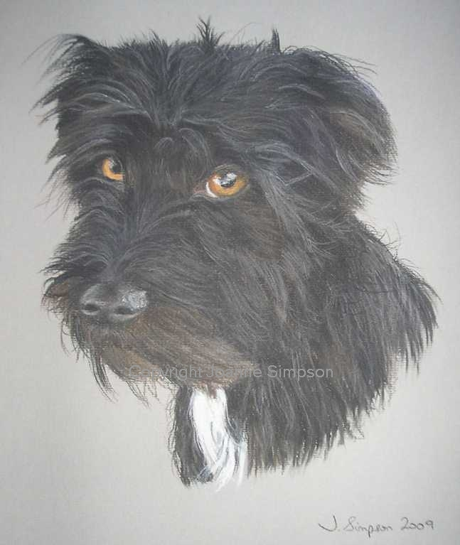 Patterdale Terrier cross pet portrait by Joanne Simpson